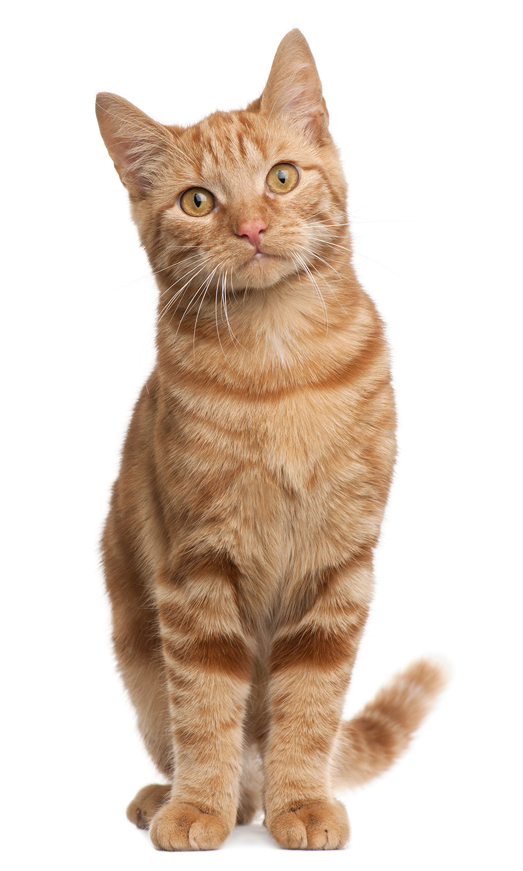 Hills Cat Food >> Ancaster Animal Hospital | Services