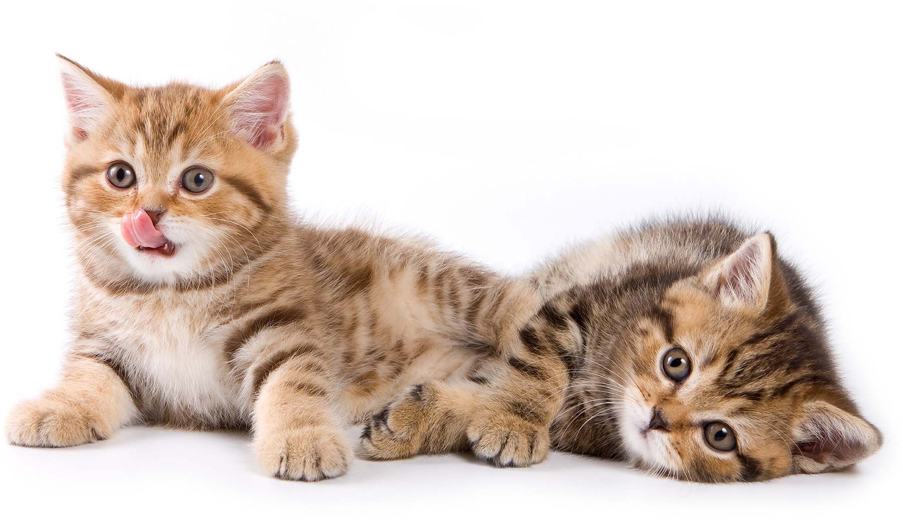 Ancaster Animal Hospital | About